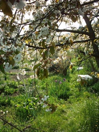 cerisiers-autres-jardins-prives-france-8740198017-940800