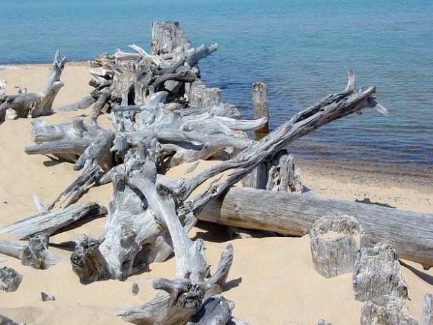 rive-en-bois-flotte-lac-paysage-plage-de-sable-de-qualite-superieure_121-73590