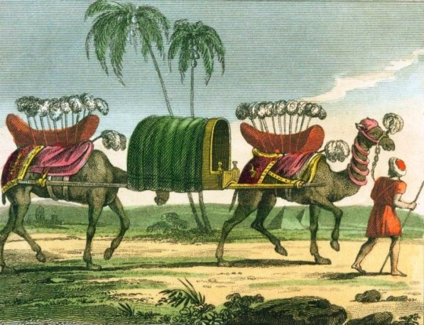 pyramide-chameaux