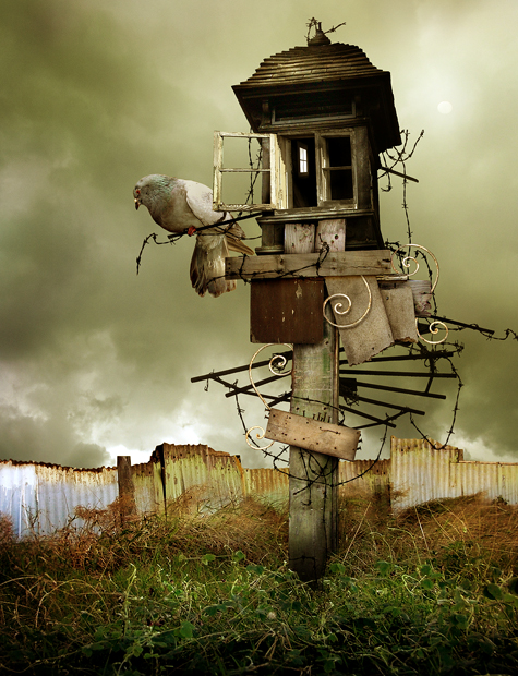 bird_house_by_machineroom