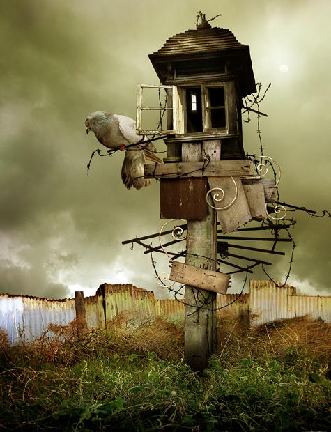 bird_house_by_machineroom