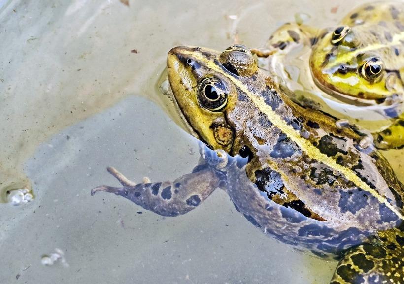 frog-1367440_1280