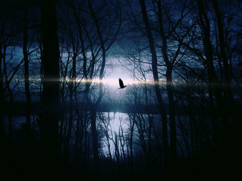 bird-383245_1280