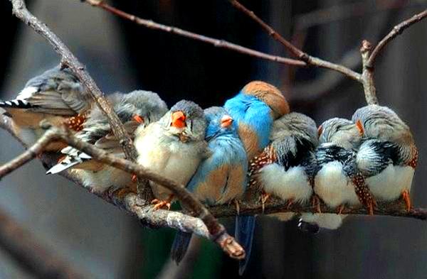 famille-oiseaux