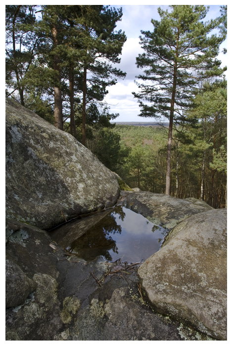 2347-foret-fontainebleau